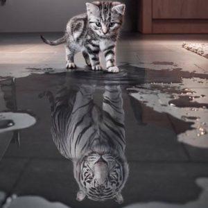 Les chats sont de véritables tigres dans l'invisible